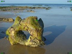 Beeston Bump (Beeston Regis) Beach in Norfolk has Paramoudras, Flint Circles and Flint Columns (Backbones)